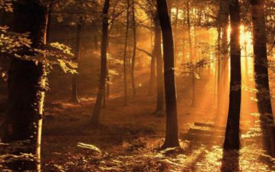 Tiempo Interior propone un otoño con la mirada de Jesús