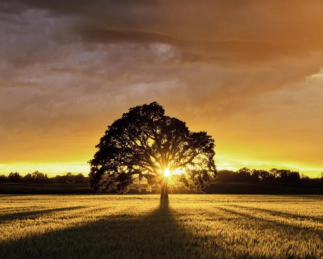 Disponible el recurs d'agost de Temps interior, comentari bíblic diari