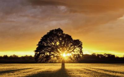 Disponible el recurso de agosto de Tiempo interior, comentario bíblico diario